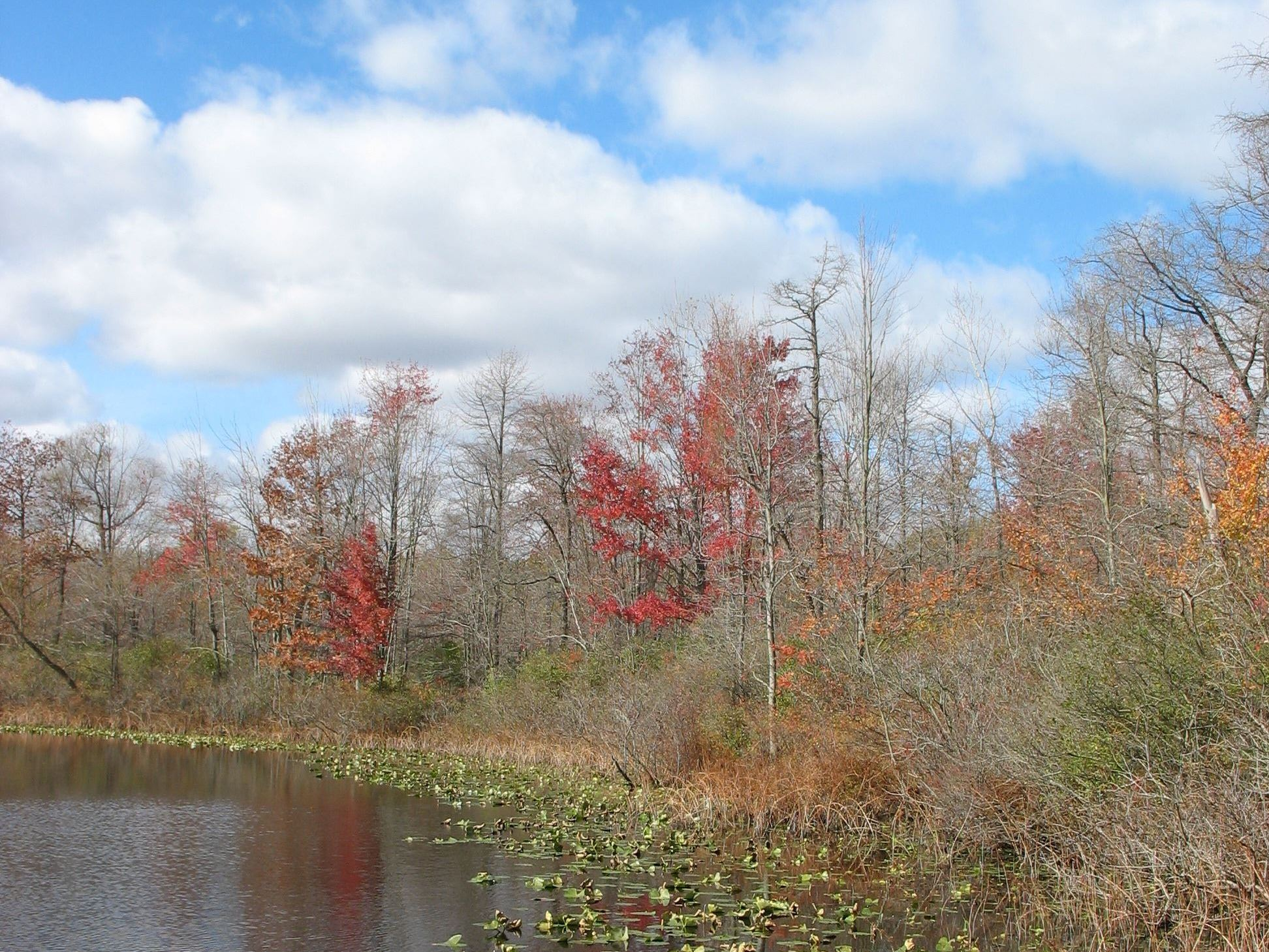 Spicer Lake nature preserve autumn colors